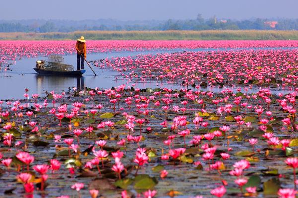 ทะเลบัวแดง หนองหาน จังหวัดอุดรธานี ไม่ไปไม่รู้ กับความสวยของธรรมชาติที่รังสรรพร้อมให้ได้ชื่นชม