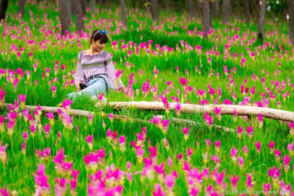 """เราอยากให้คุณไป. """" ทุ่งดอกกระเจียว """" ในอุทยานแห่งชาติป่าหินงาม"""