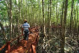 ท่องเที่ยว ป่าชายเลน