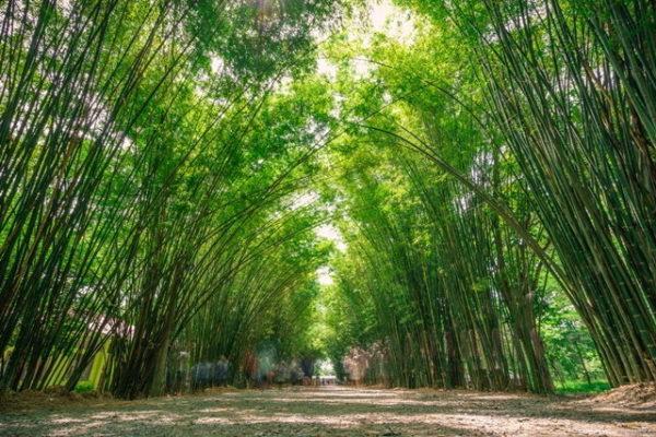 อุโมงค์ซุ้มต้นไผ่ อาราชิยาม่าเมืองไทย
