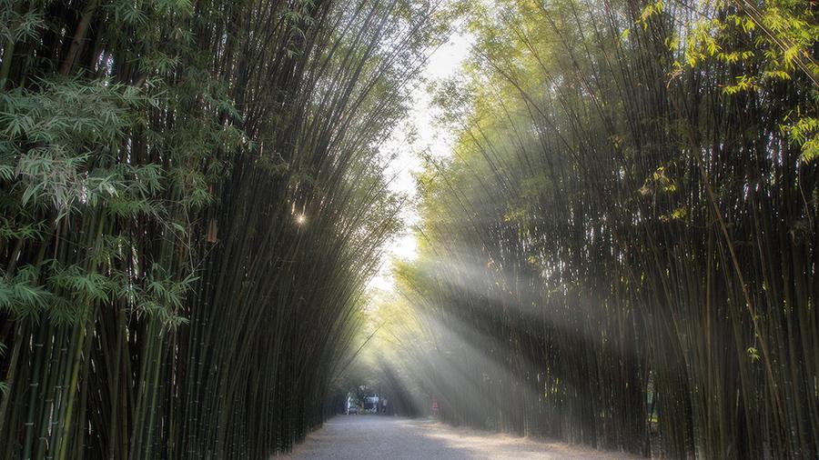 อุโมงค์ซุ้มต้นไผ่ pic 2