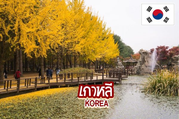 เกาหลีใต้ ก็มีธรรมชาติ 5 สถานที่ท่องเที่ยวดีท็อกซ์ใจด้วยป่าเขียวที่ไม่ควรพลาด
