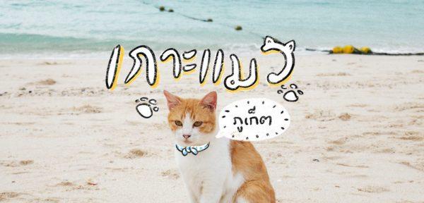 เกาะแมว ไม่ต้องเดินทางไกลไปถึงญี่ปุ่น ที่เมืองไทยก็มีให้เราได้เดินทางไปเที่ยวกัน